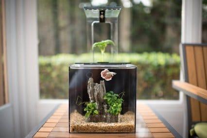 EcoQubeC Aquarium