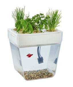 Back to the Roots Water Garden Fish Tank