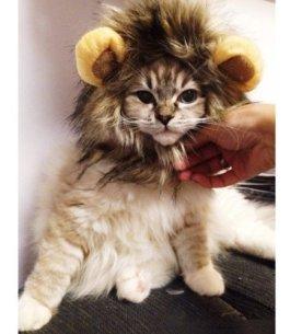 Lion Mane Cat Costume