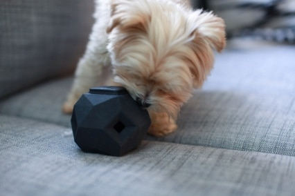 The Odin Dog Treat Puzzle Toy