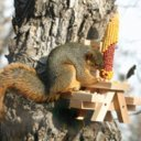 Picnic Table Squirrel Feeder