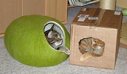 Modern house for modern cat