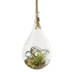CYS Plant Terrarium