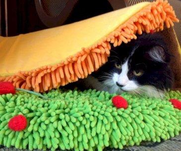 Taco Cat Bed