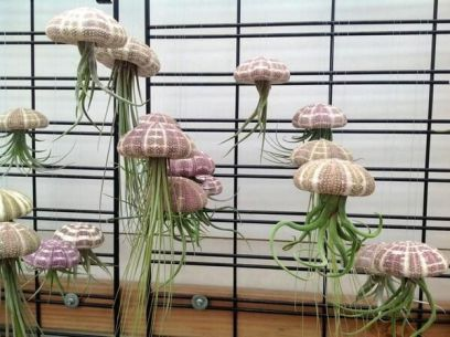 Air Plant Flying Jellyfish